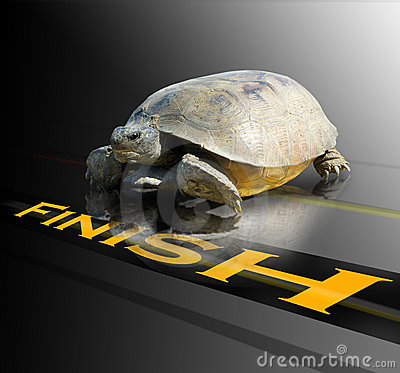 turtle crossing finish line