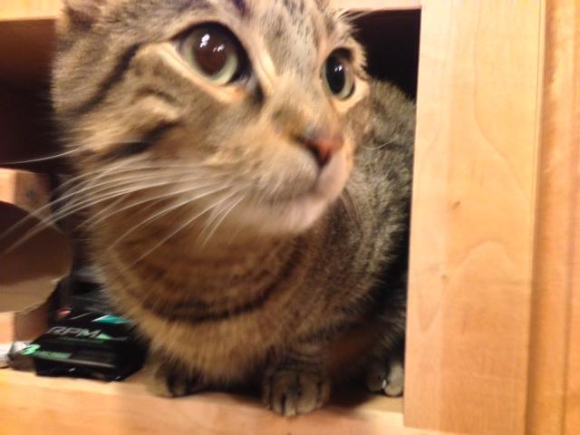 cabinetcat