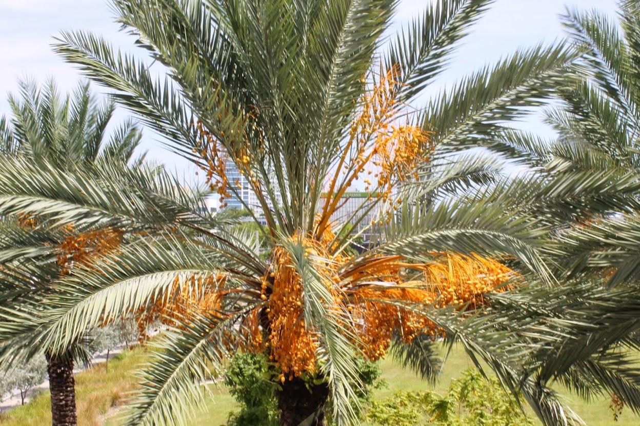The Date Palm Markham