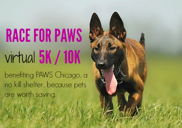 Paws Chicago virtual 5k